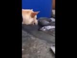 собака спасает рыб