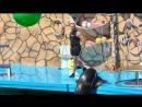 выступление в дельфинарии морского льва