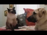 new best epic | funny compilation cat and dog 2015