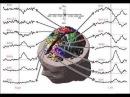 3 Энергетическая вибрация в мозжечке и Волны Шумана