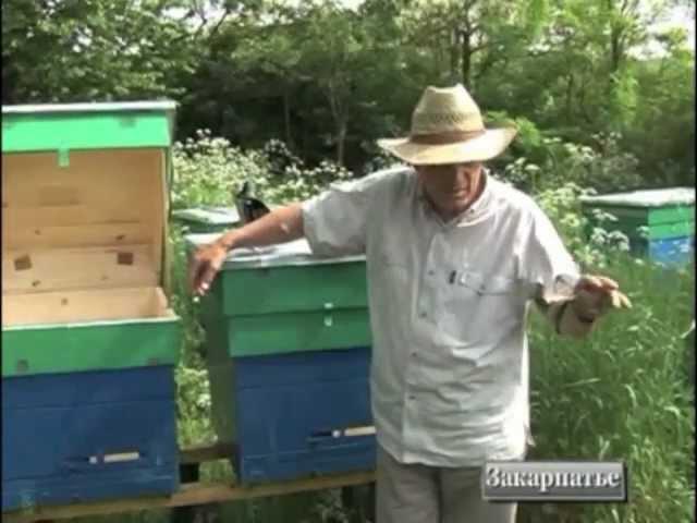 Источники чистопородных карпатських пчел