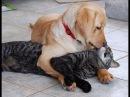 Кошки и собаки лучшие друзяки СМОТРЕТЬ ПРИКОЛЫ С ЖИВОТНЫМИ #2