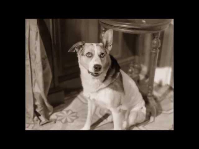10-Собачье сердце-Почему нужно запирать калоши?