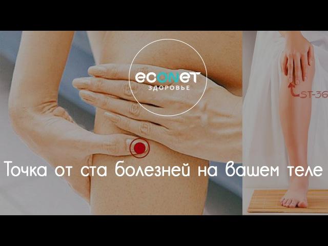 ТОЧКА ДОЛГОЛЕТИЯ точка от 100 БОЛЕЗНЕЙ на вашем теле | econet. ru