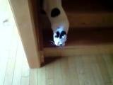 Кот течет по лестнице (жидкий кот))))