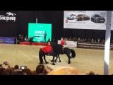 Аргентинское танго на лошадях фризах. Эквирос 2015