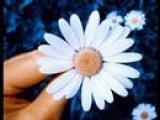 Salvatore Adamo - Fleur