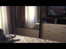 Кот смотрит парад победы не отрываясь от экрана