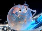 Самые невероятные и необычные животные мира!