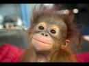Смешное видео про животных Улетные животные Смешно до слез Очень смешные ролики
