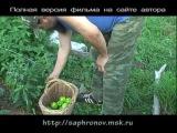 Огород (перцы-томаты) в родовом поместье. 6 часть