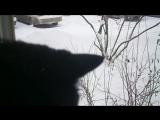 19.03.16 кот и снег