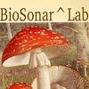 ::: BioSonar^Lab ::: Звуковая Лаборатория
