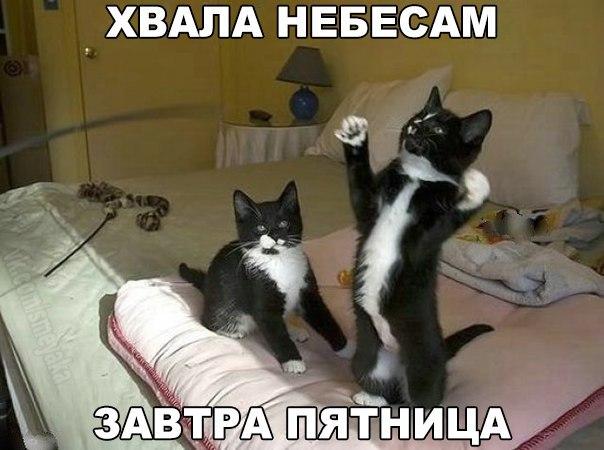 http://cs627326.vk.me/v627326723/16567/VW0JN3GwucQ.jpg