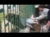 Нападения животных на людей __ ЖЕСТЬ 18