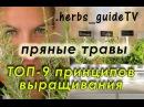 ТОП-9 принципов выращивания пряных трав на подоконнике