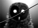 i love you but I've chosen darkness the owl