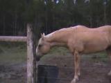 Ничего необычного,просто парень испугался коровы