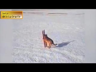 Самая смешная подборка приколов  с животными Январь 2015 [CCП]#1