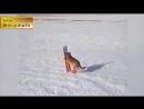 Самая смешная подборка приколов с животными Январь 2015 CCП1