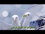 Красивый Нашид на арабском языке