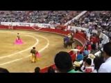 Progreso de Guadalajara promediando 525kg de peso bien presentados y bravos de la ganader