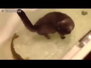 Кот и рыба в одной ванной