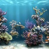 Коралловый клуб Киев | бизнес под ключ