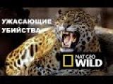 Ужасающие убийства. Смертельно опасны бегемоты. Шакалы. Гепарды. Nat Geo Wild