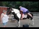Мать моя женщина и за что это всё лошадям?!