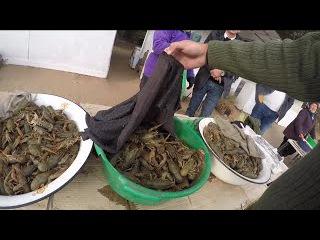 На рыбалку за донским забаном: часть 5 как мы раков не покупали