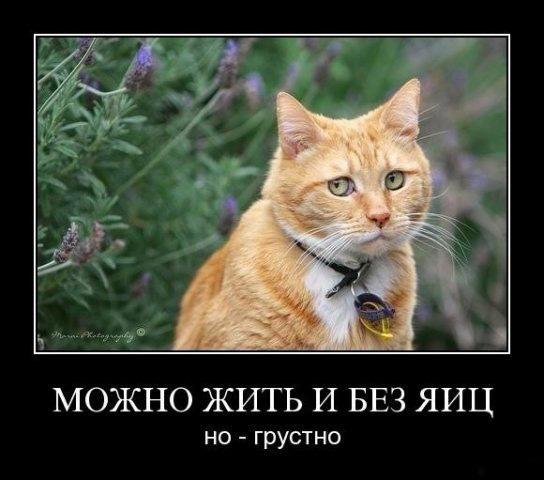 yjKv1h6 8Z8 - Женщина бежит по деревне из леса, вся раскраснелась, растрепанная...
