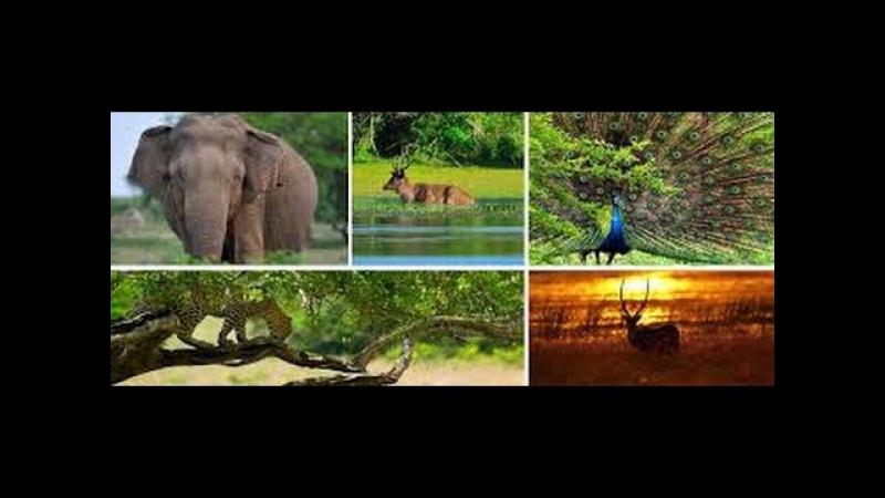Дикая природа Шри-Ланки - Чарующая Шри-Ланка