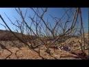 Ras Mohamed National Park Unesco Heritage South Sinai - Egypt