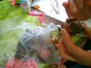 как лечить луковицу лилии после покупки в магазине