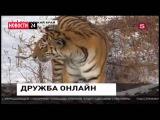 Пятимиллионный пасажир в Крыму! Амур и Тимур: Дружба ОНЛАЙН! Елка под водой Свежие Новости России