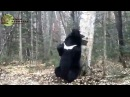 Медведь-почесун на Земле леопарда/Bear-scratcher in the Land of the Leopard National park