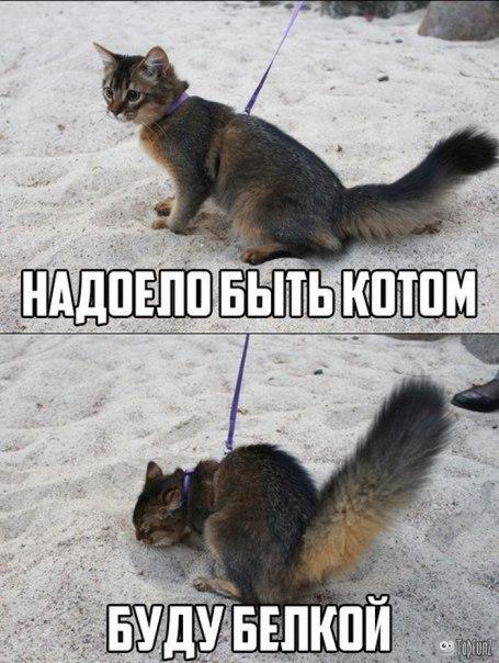http://cs627330.vk.me/v627330056/3ebff/ChalvhRYaxM.jpg