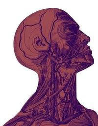 «Тело человека» * с 18.09.2015 * «Конюшенная, 2»