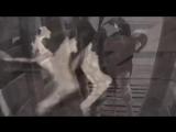 Пол Маккартни - Если бы скотобойни имели стеклянные стены