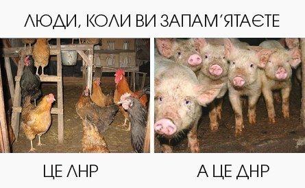 Порошенко и Саманта Пауэр обсудили имплементацию Минских договоренностей - Цензор.НЕТ 9184