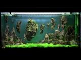 - Aquarium Setup - Aquascape- http://vk.com/natureaqua_fish
