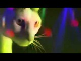 Очень смешное видео. Коты на дискотеке | A very funny video. Cats are on the disco