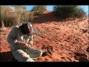 Наука выживать - Пустыня Калахари