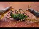 Удивительный микромир жизнь под микроскопом 2 - Amazing microcosm life under a microscope 2