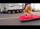 Аладдин на ковре самолете в Нью Йорке пранк прикол
