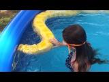 Girl swims with huge Burmese python