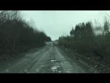 Elk on the road