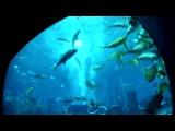 Дубаи. Отель Атлантис. The Lost Chambers / Затерянный мир (аквариум)