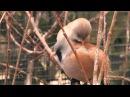 Усатые синицы Фельдман Экопарк / Feldman Ecopark's bearded reedlings